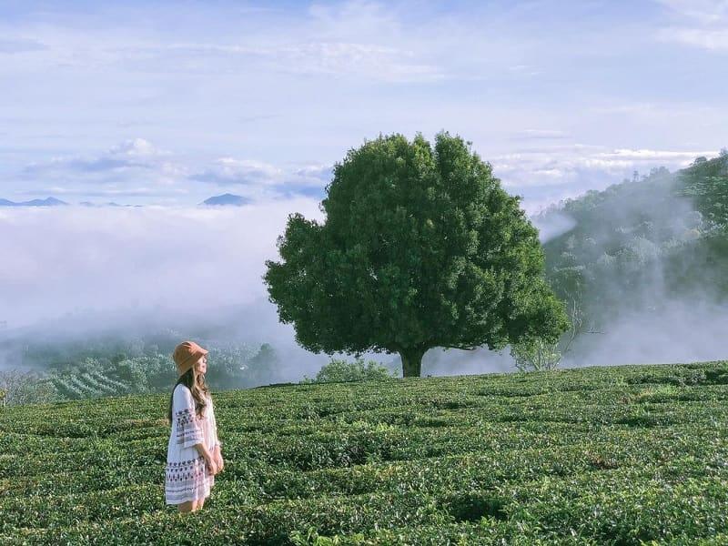 Săn mây Đà Lạt 5